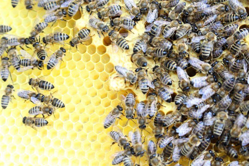 Bienen, Schulimkerei